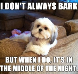 bark in the middle of the night