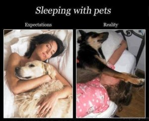 Sleeping-With-Pets